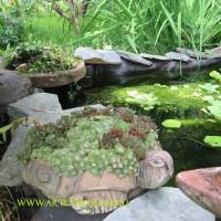 Черепаха , д.12-40см цена200-1000руб